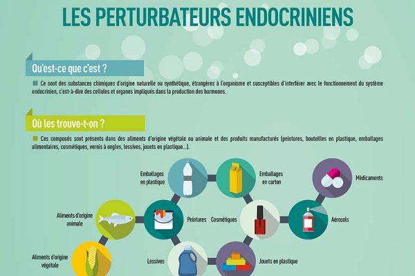 Infographie perturbateurs endocriniens